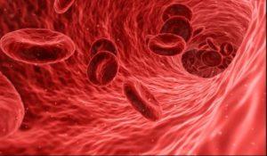 सीजीजियम अरोमॅटिकम