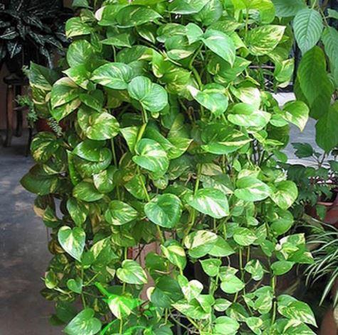 Air purifier plants in hindi