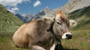 10 lines on cow in Hindi : गाय पर 10 वाक्य निबंध।