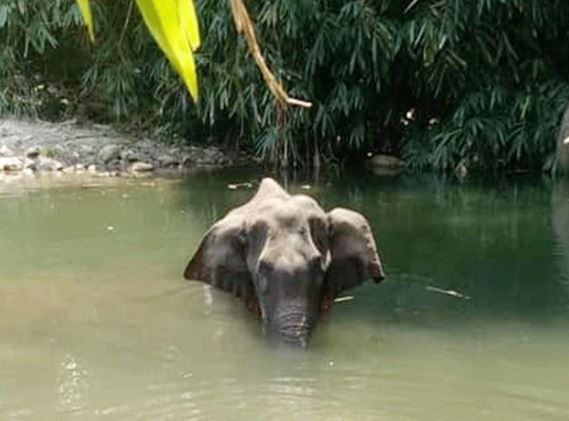 pregnant elephant dies pinkstea 2