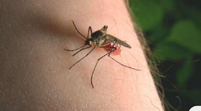 मच्छर के काटने पर