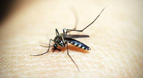 मानसून के मौसम मच्छरों