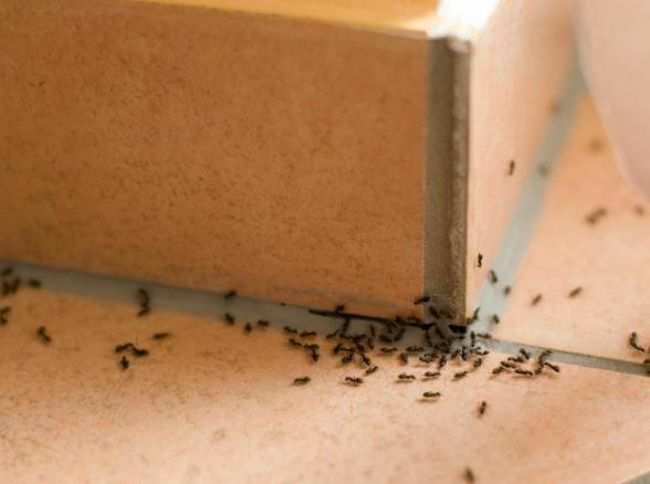 घर में कीड़े-मकोड़े