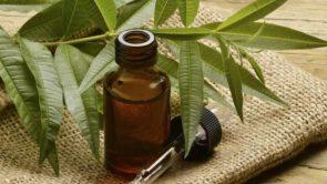 बालों के लिए टी ट्री ऑयल के फायदे – Tea tree oil benefits for hair in hindi.