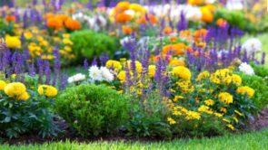 Flowers Name In Hindi : फूलों के नाम हिंदी में और अंग्रेजी में उनकी फोटो के साथ।