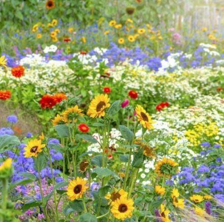 फूलों के नाम हिंदी में