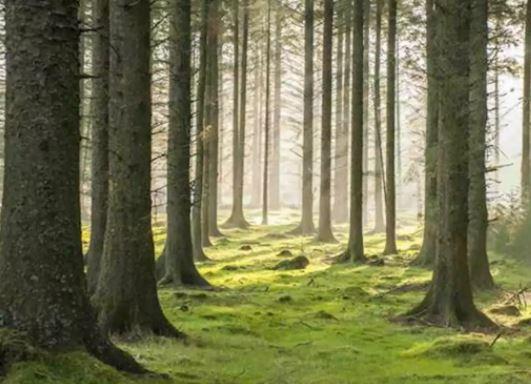 पेड़ पर 10 वाक्य निबंध